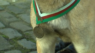 'For Gallantry': The medal awarded to military dog Mali.