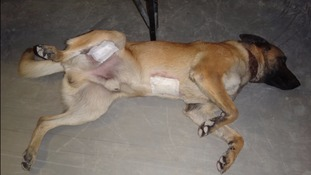 Mali was badly hurt by grenade blasts.