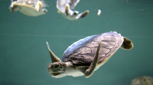 Turtles, fish, birds and seals are dying after eating or being caught in plastic.