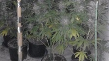 Hundreds of cannabis plants found at house in Gillingham