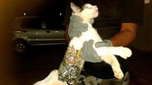 The cat being held by a prison officer with a mobile phone strapped to its stomach