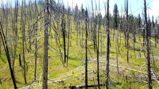 These are the charred remains of a forest after the fire struck.
