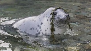 sealsayshello