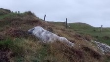 Seal pup named 'Edmund' after climbing cliff