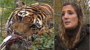 Zoo keeper picks up deadly disease saving animals abroad