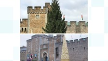 Cardiff's Christmas tree replacement sparks debate