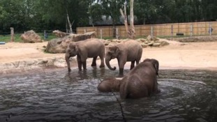 Elephants to be moved from Twycross Zoo