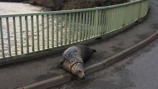 The seal was swept out of the sea and onto land