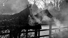 Steamy Horses at Roos, East Yorkshire