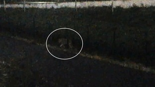 Tiger shot dead after roaming streets of Paris after circus escape