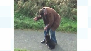 RSPCA appeal after video shows dog being 'deliberately' hit and yanked in Aberystwyth