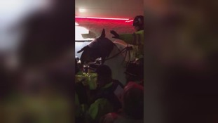 "Masked football ""fans"" clash with police in Brighton - six arrests"