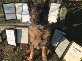 Blue was commended by the PDSA.