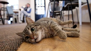 Police advice on keeping cats safe after series of attacks