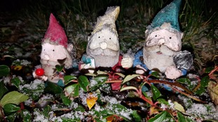 First signs of snow last night on garden gnomess