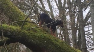 Pictures show dog rescued from 20ft tree overhanging river