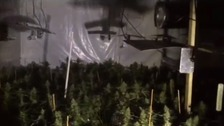 Police released footage of the suspected cannabis factory.
