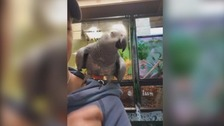 Barney the parrot and other animals were stolen.