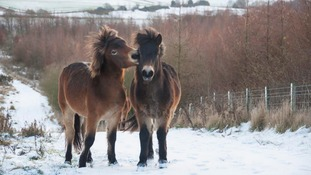 The ponies are settling for winter