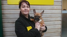 Pierre is pictured safely back in the arms of canine carer Lisa Cole