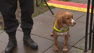 Sniffer dogs were also deployed, to detect any signs of illegal substances or explosives.