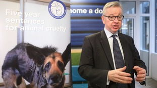 Gove insists Brexit is great for animal welfare, with draft bill raising jail time for cruelty