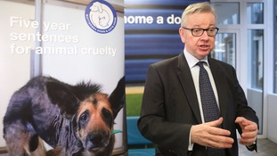 Gove: Leaving the EU will help Britain improve animal welfare standards.