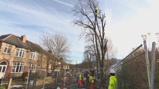 Protestors angry at pre-dawn tree felling