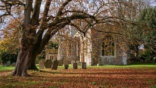 The last autumn leaves
