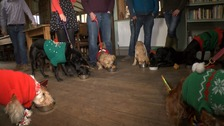 Norfolk pub that caters for peckish pooches