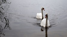 Six swans 'stabbed and beheaded' in south London parks