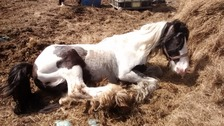 The horse was found in difficulty at allotments in Barnsley