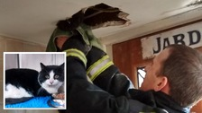 Fire crews rip out ceiling to save trapped cat