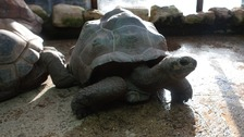 Mike is 20 years old and joins the zoo's three other tortoises.