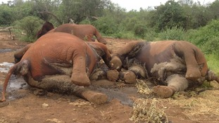 Kenya elephants poaching