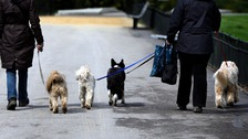 Tougher rules proposed for dog walkers in Carlisle