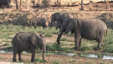 Rangers in British-backed project 'complicit in elephant slaughter'