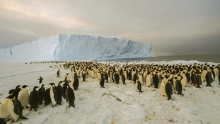 Thousands of penguins are pictured on Antarctica's Princess Ragnhild Coast