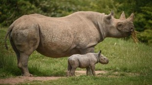 Chester Zoo's top 10 babies of 2017