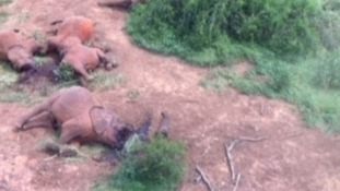 The family of 12 elephants in Kenya, on Saturday