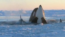 Whales Canada