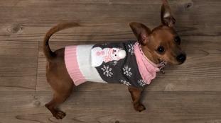 """Skyla in her Christmas jumper on her 1st Birthday."""