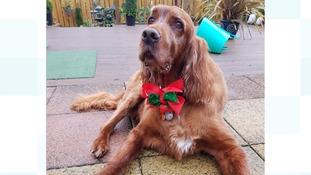 """Merry Christmas from Shamus"""