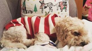 """""""Alfie enjoying a festive snooze"""""""