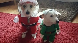"""""""This is Jazz and Pippa in their Christmas outfits"""""""