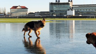 Dogs play on frozen flood water at York Racecourse, North Yorkshire, as cold weather sweeps across the UK in December 2012