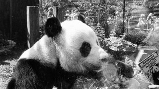 Former Prime Minister Margaret Thatcher refused to share plane with panda