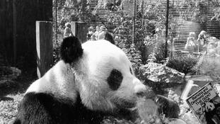Chia Chia resided at London Zoo.