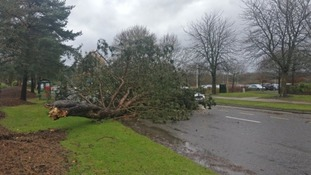 A tree blocking the road in Whiteley, Hampshire