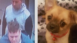 Puppies stolen by two men 'posing as buyers'